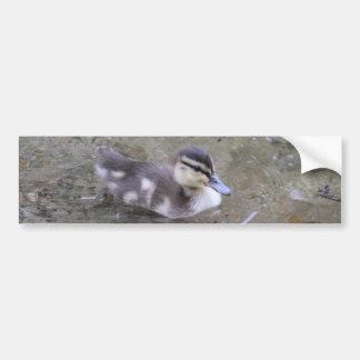 Duckling Car Bumper Sticker