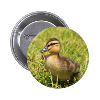 Duckling Pinback Buttons