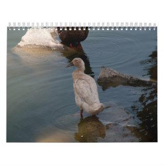 Duckling calendar