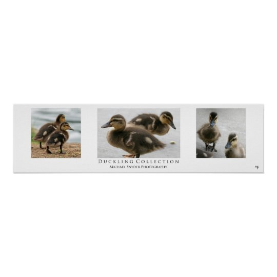 """""""Duckling Collection"""", White Poster"""