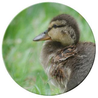 Duckling duck chicken ~ photo Jean Louis Glineur Porcelain Plate