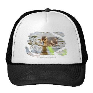 DUCKLING DUCK CHICKEN photo Jean Louis Glineur Trucker Hat
