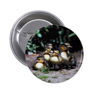 Duckling Group 2 Inch Round Button