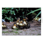 Duckling Group Greeting Cards