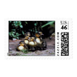Duckling Group Postage Stamp