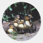 Duckling Group Sticker