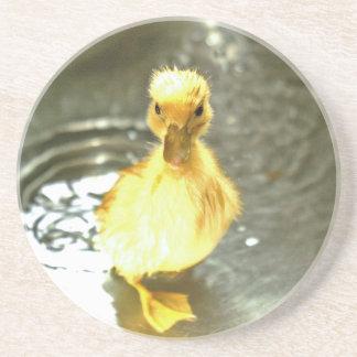 Duckling has a bath. beverage coaster