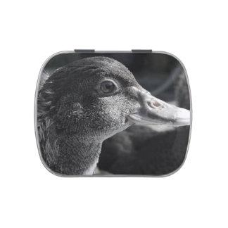 duckling head wet beak bw bird farm animal jelly belly tin