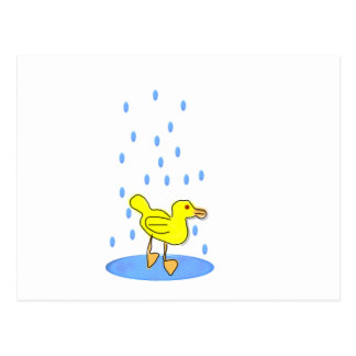 Duckling In Water Post Cards