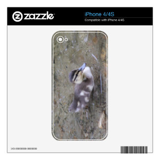 Duckling iPhone 4S Decal