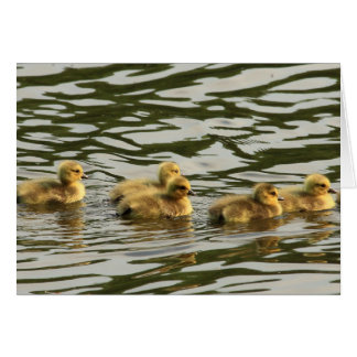 duckling line card