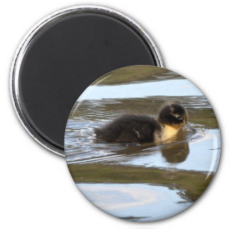Duckling on Bright Water 2 Inch Round Magnet