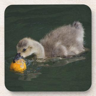 Duckling & Orange Peel Coaster