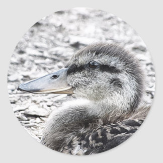 Duckling Painting Photograph Stickers