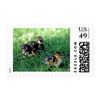 Duckling Parade Stamp