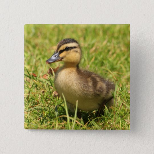 Duckling Pinback Button