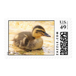 Duckling Postage Stamps