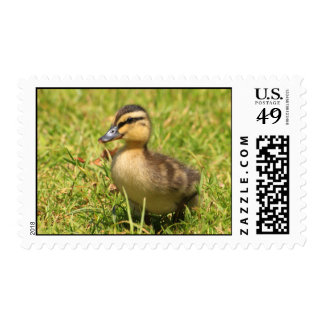Duckling Postage