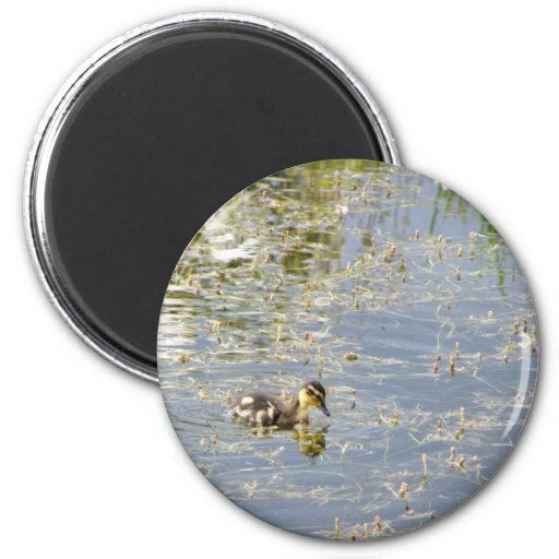 Duckling Reflections 2 Inch Round Magnet