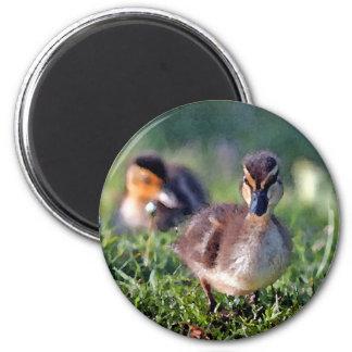 Duckling Refrigerator Magnet