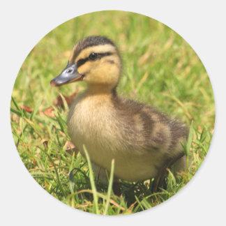 Duckling Round Sticker