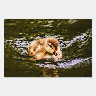 duckling signs