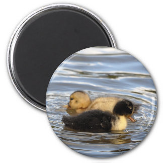 Ducklings 2 Inch Round Magnet