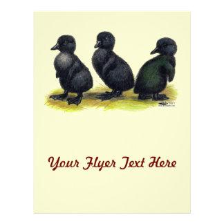 Ducklings Black Cayuga Flyer