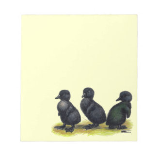 Ducklings Black Cayuga Memo Pad