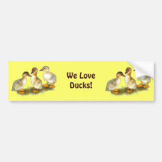 Ducklings:  Buff Orpingtons Car Bumper Sticker