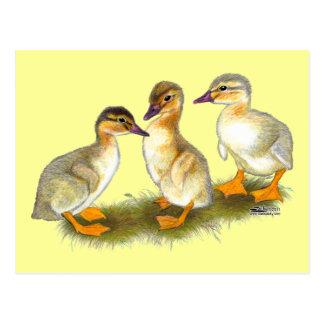 Ducklings:  Buff Orpingtons Postcard
