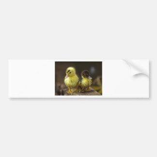 Ducklings Car Bumper Sticker