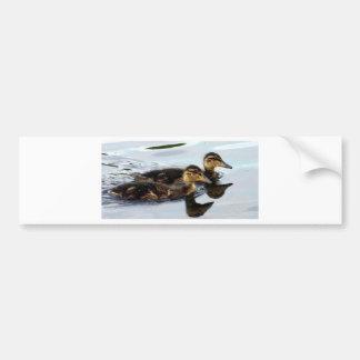 ducklings bumper sticker
