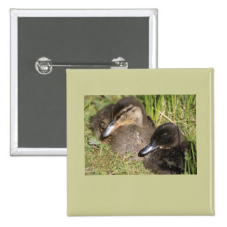 Ducklings Pinback Buttons