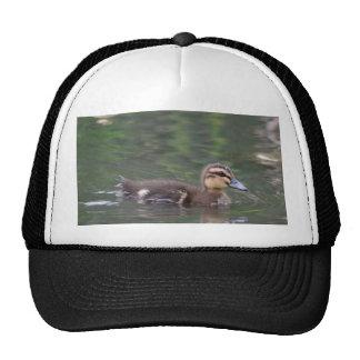 Ducklings cap trucker hat