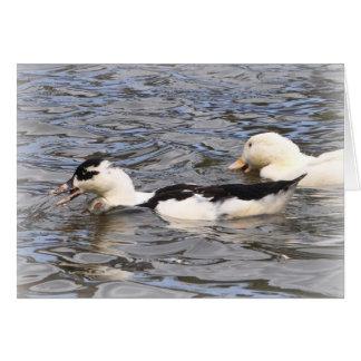 Ducklings Card