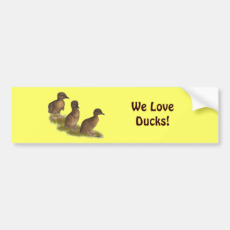 Ducklings:  Chocolate Runners Car Bumper Sticker