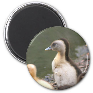 Ducklings Magnet