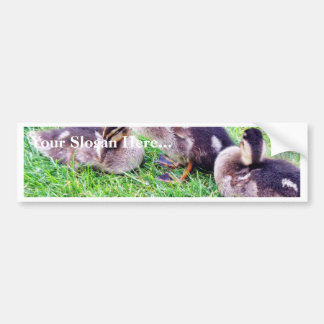 Ducklings On The Grass Car Bumper Sticker