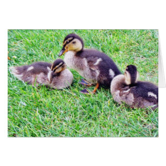Ducklings On The Grass Cards
