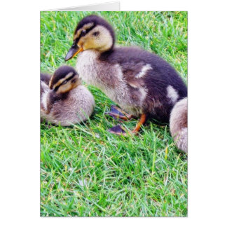 Ducklings On The Grass Greeting Cards