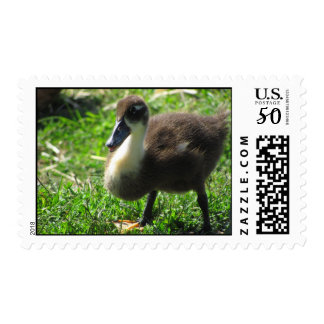 Ducklings on the Grass Postage