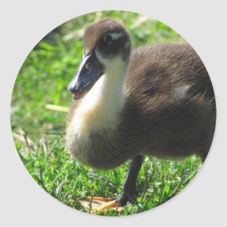 Ducklings on the Grass Round Sticker