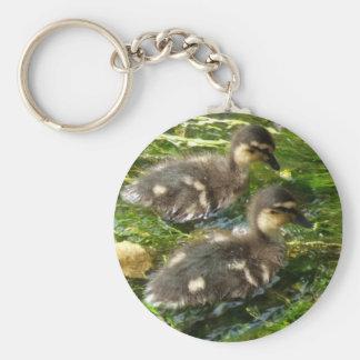Ducklings Postcard Keychain
