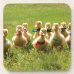 Ducklings with Bandanas Coaster
