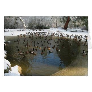 duckpond in winter card