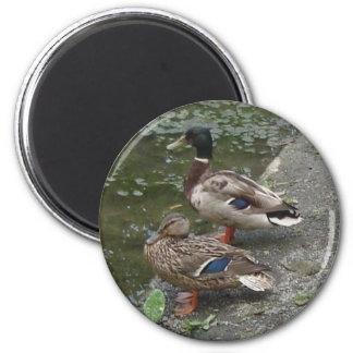 Ducks 2 Inch Round Magnet