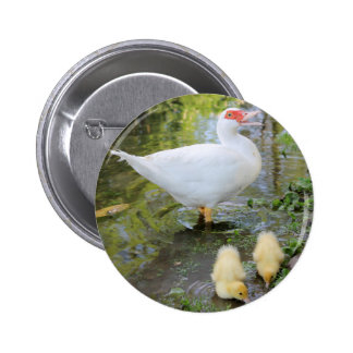 ducks and chiks on lake pinback button