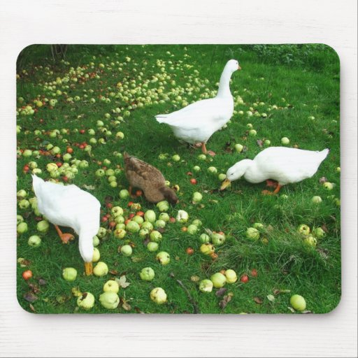 Ducks and goose in apple windfalls mouse pad
