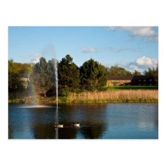 Ducks and rainbow postcard